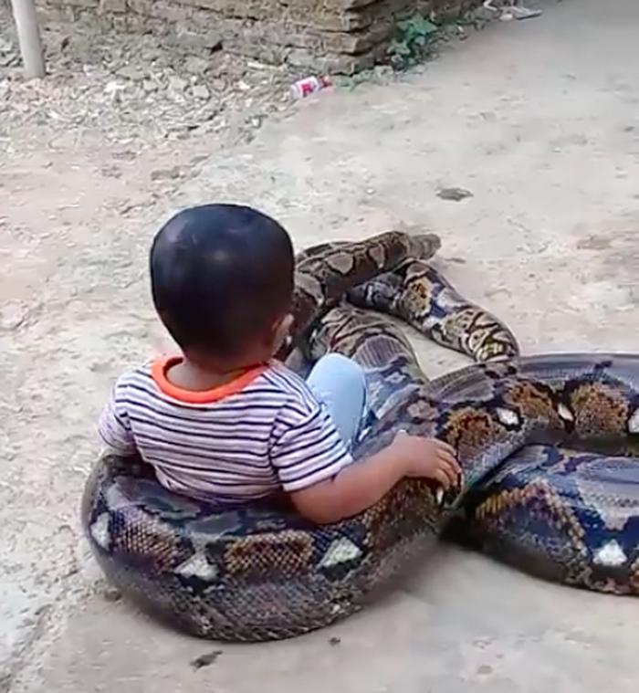 В Индонезии родители сняли на видео, как их ребенок играет с питоном