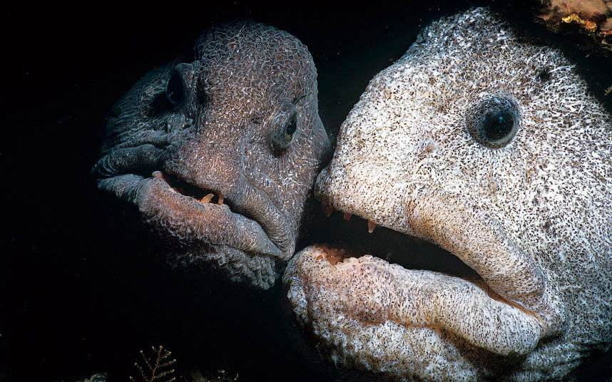 Ужасающие морские существа