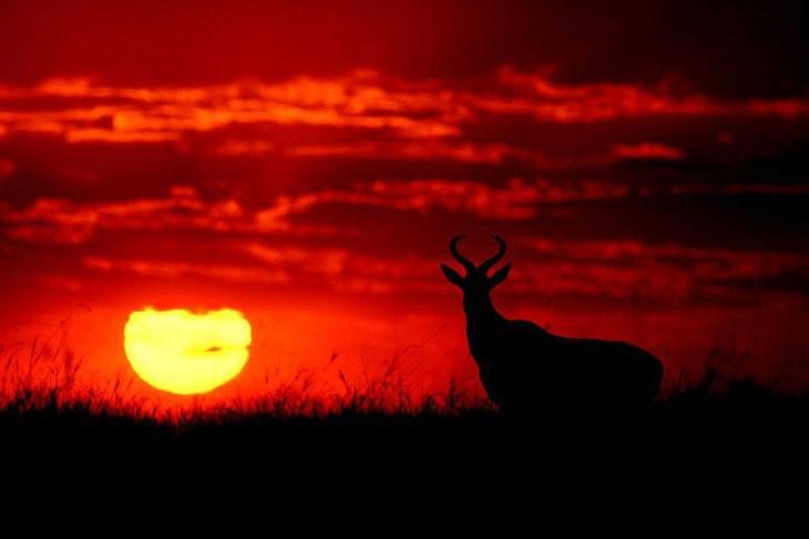 Животные Африки в фотографиях