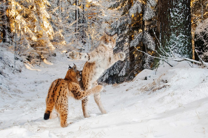 Фотографии с конкурса Wildlife Photographer of the Year 2018