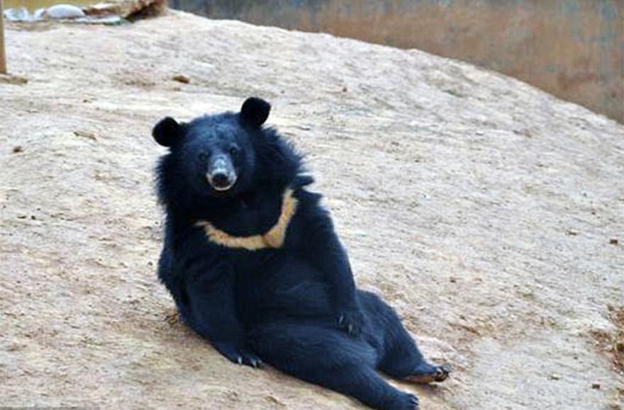 Китаец два года растил собак, а вырастил медведей