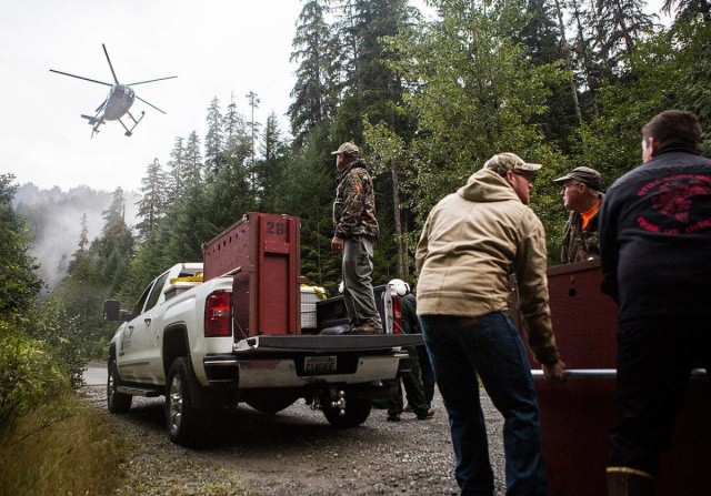 Транспортировка коз из национального парка при помощи вертолета (5 фото)