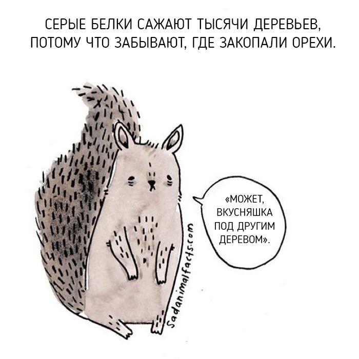 Неожиданная правда о животных от Брук Баркер