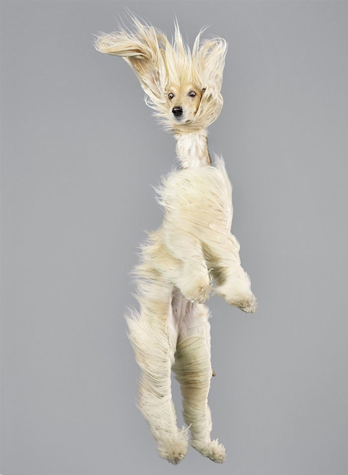 Смешные портреты летающих собак от немецкого фотографа