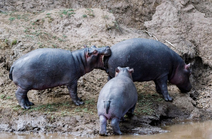 Самые смешные фотографии животных 2018 года