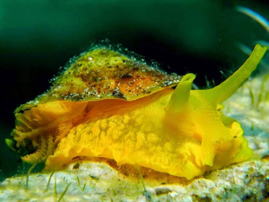 Яркие и необычные представители фауны