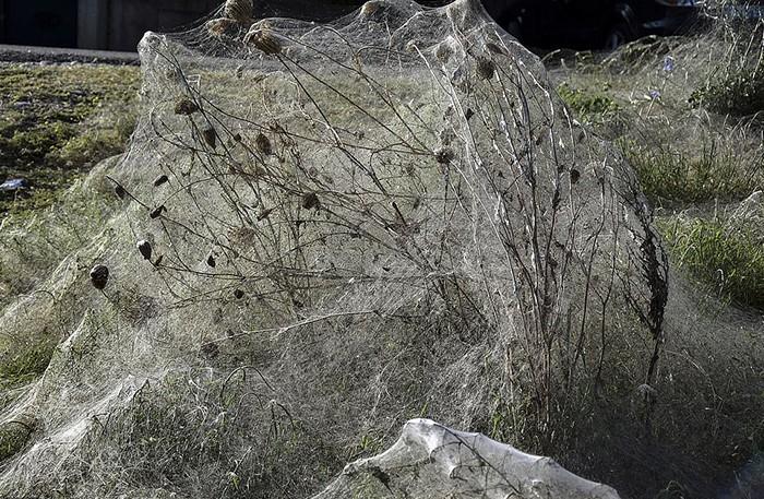 Пауки захватили побережье в Греции