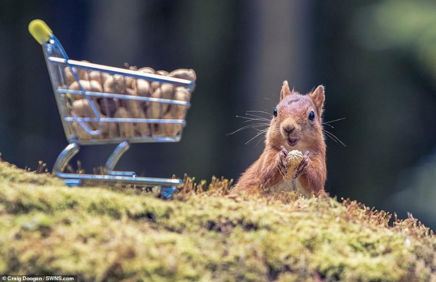 Забавная фотосессия белок от шотландского фотографа