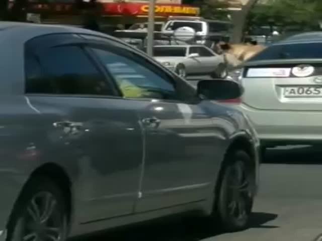 Опасный пассажир автомобиля во Владивостоке