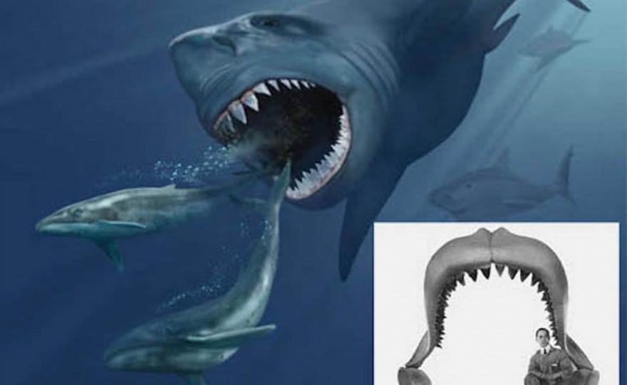 Акулы, найденные в морских глубинах