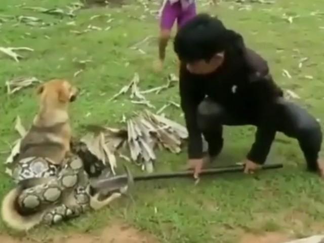 Не позволили змее задушить собаку
