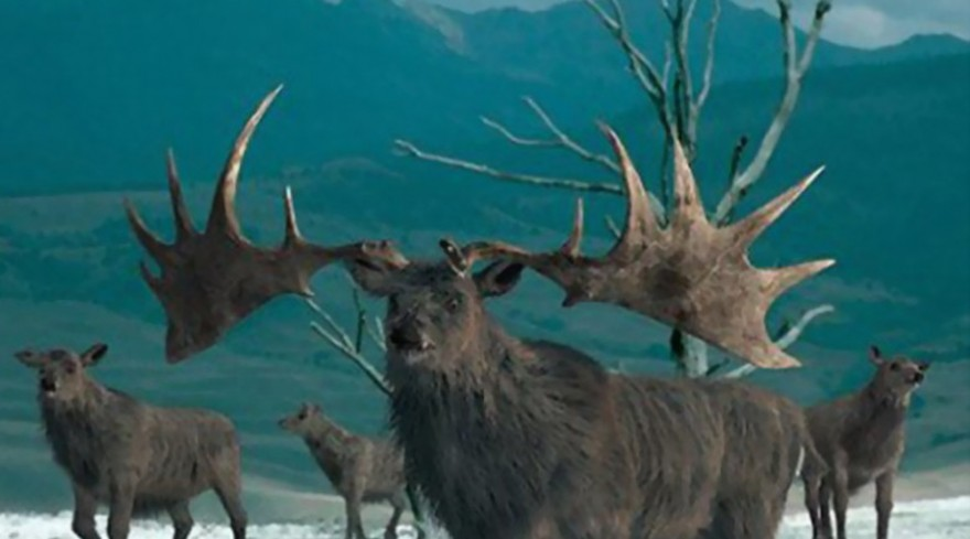 Популяцию этих животных хотят восстановить