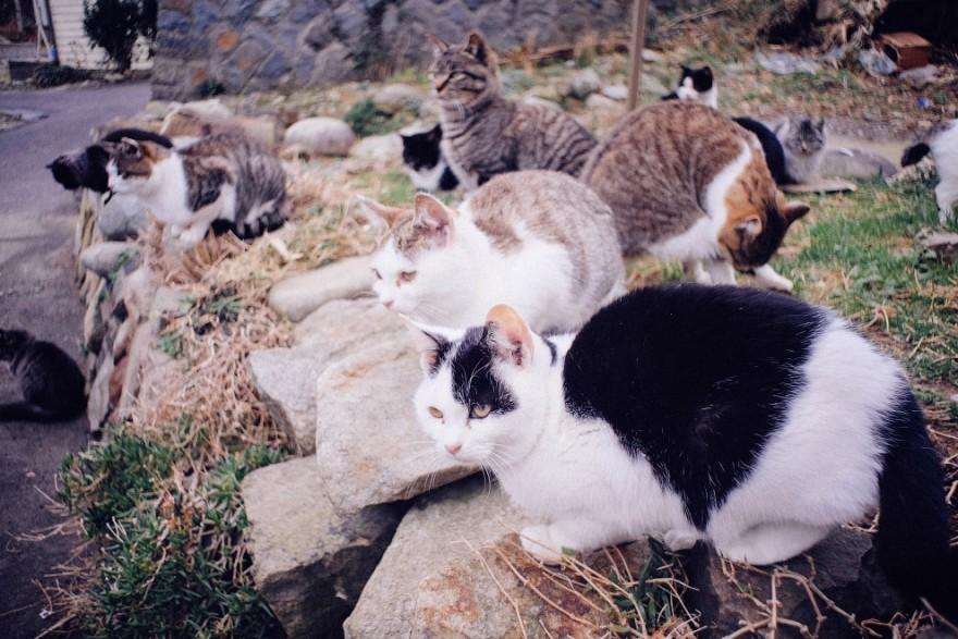 Остров кошек в Тихом океане