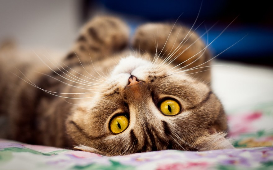Почему нельзя отгонять кошек когда они трутся об тебя