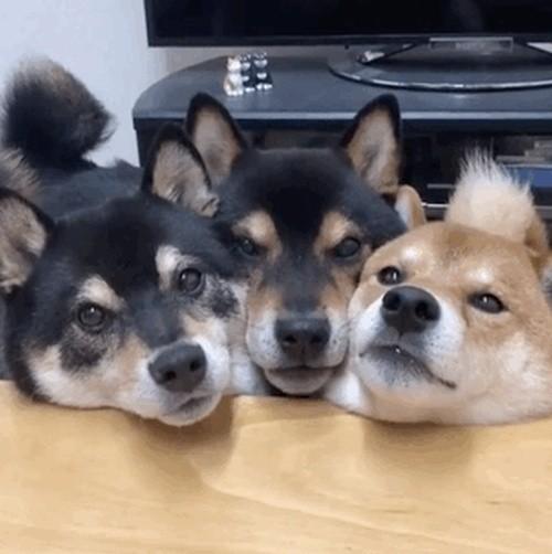 Позитивные гифки с собаками (13 гифок)