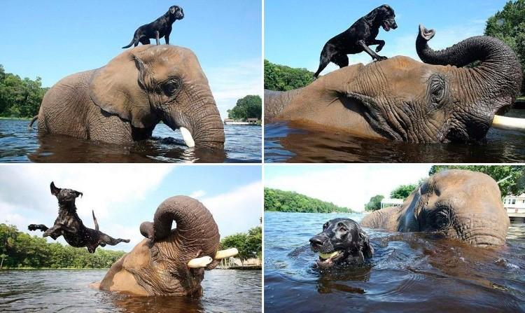23 умилительных фото дружбы зверей