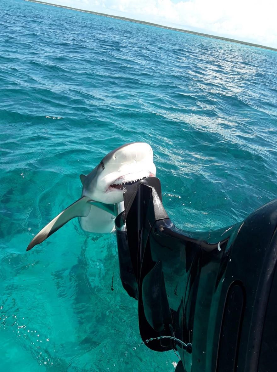 Акула вцепилась в лодку ловца барракуд