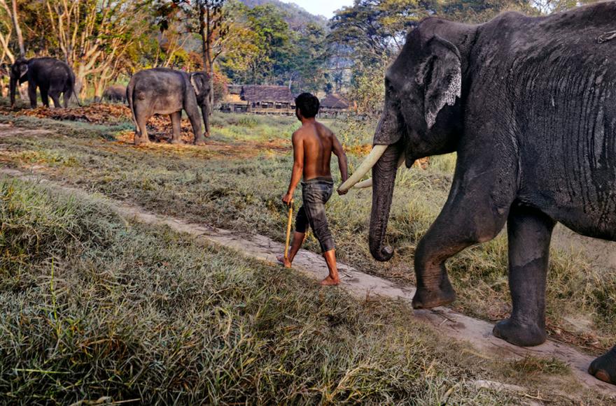 Слоны и люди