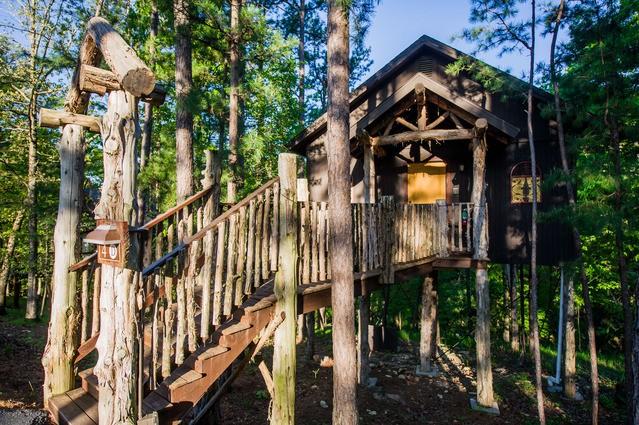 Отели, которые воплотили детскую мечту о доме на дереве