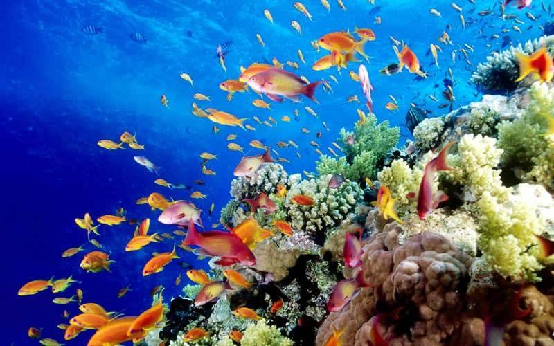 10 потрясающих национальных парков мира