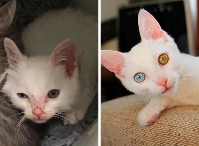 Животные, которые нуждались в помощи: до и после (14 фото)