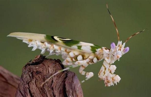 Самые необычные насекомые