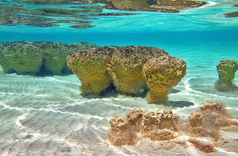 Удивительные живые камни