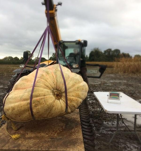 Британец вырастил 1000-килограммовую тыкву и превратил ее в... (4 фото)
