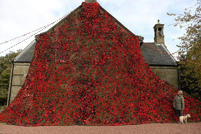 В Шотландии связали ковер из маков в честь 100-летия окончания Первой мировой войны