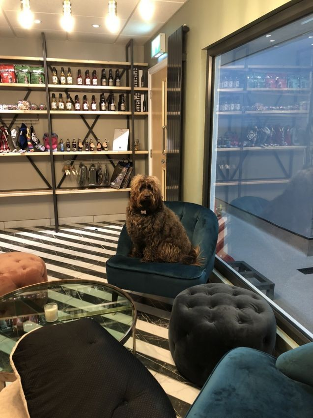 В Великобритании открыли пятизвездочный отель для собак