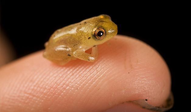 10 самых маленьких вещей в мире