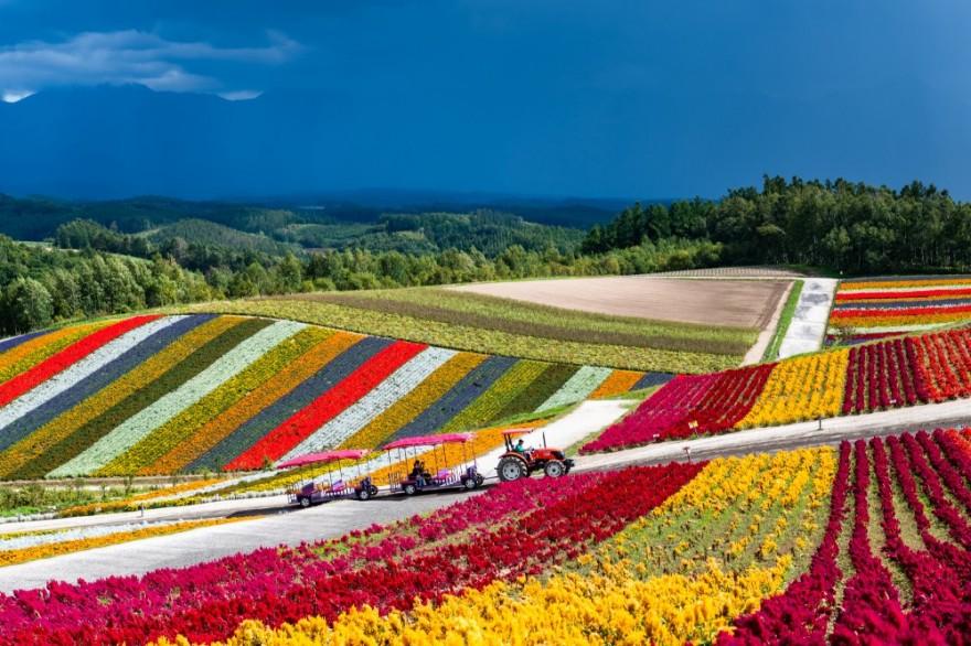 Яркая цветочная ферма в Японии