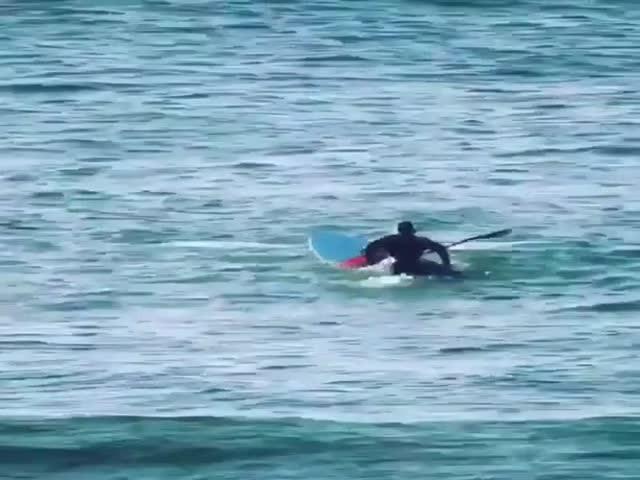 Океан наш, тебе здесь не место, человек!