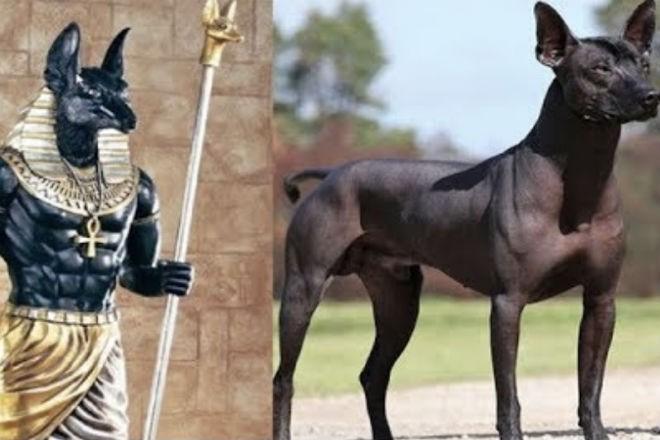 Самые древние породы собак