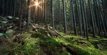 «Дышащий» лес в Канаде запечатлели на видео