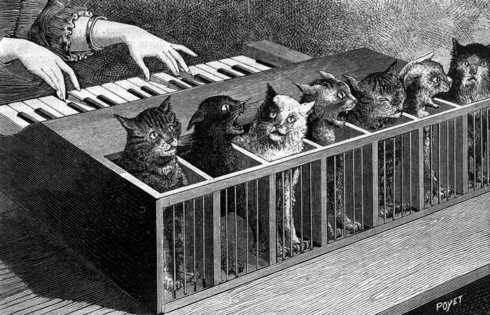 За что котов подвергали пыткам в Средневековье?