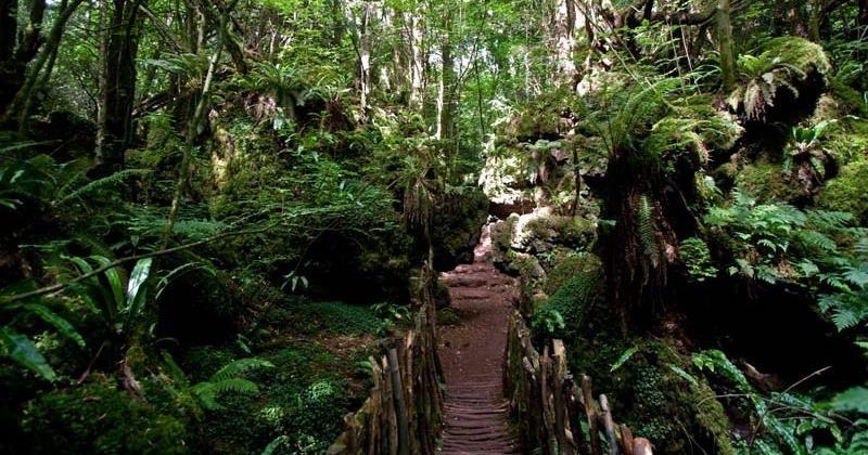 Лес Пазлвуд, которым вдохновлялся сам Толкиен