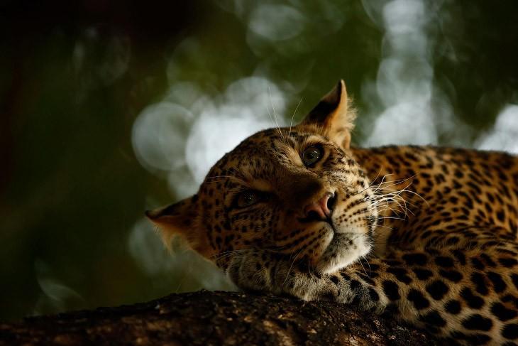 Лучшие отобранные фотографии дикой природы с конкурса в Англии