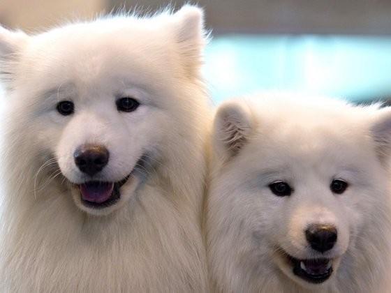 6 лучших пород собак, которые подойдут интровертам