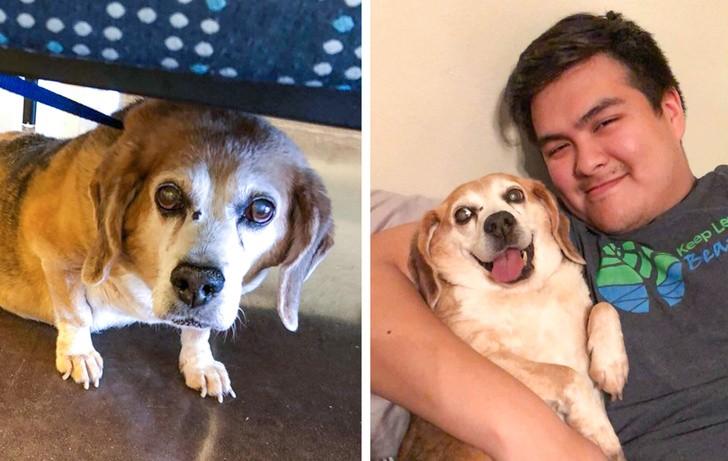 9 простых шагов помощи бездомному животному, которые может сделать каждый