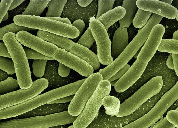 14 познавательных фактов о ДНК