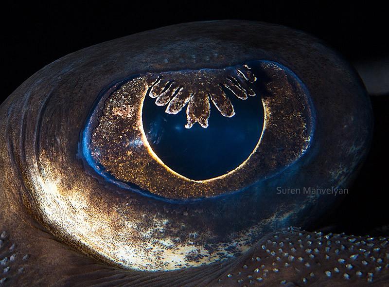 Глаза животного мира