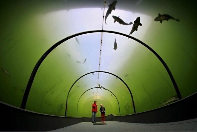 Необыкновенный туннель под озером в Чехии