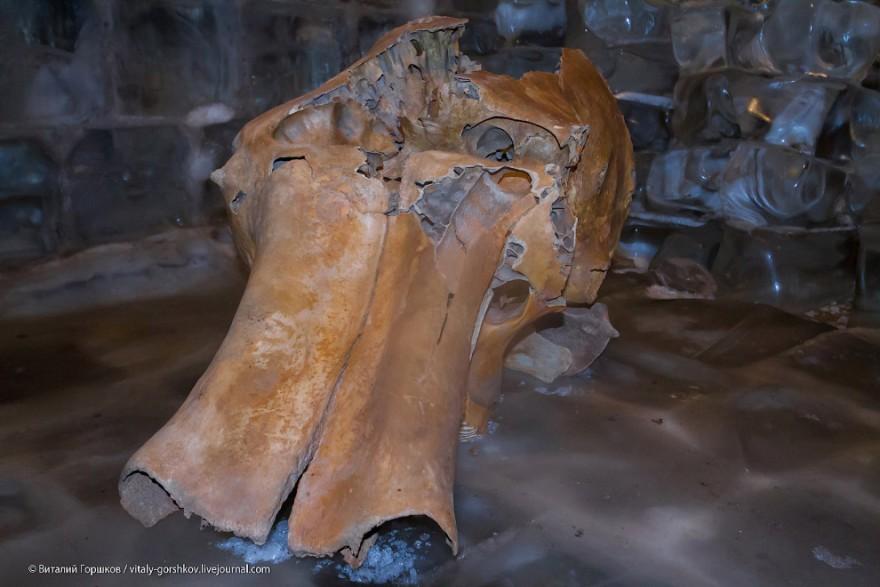 Музей мамонта в Хатанге