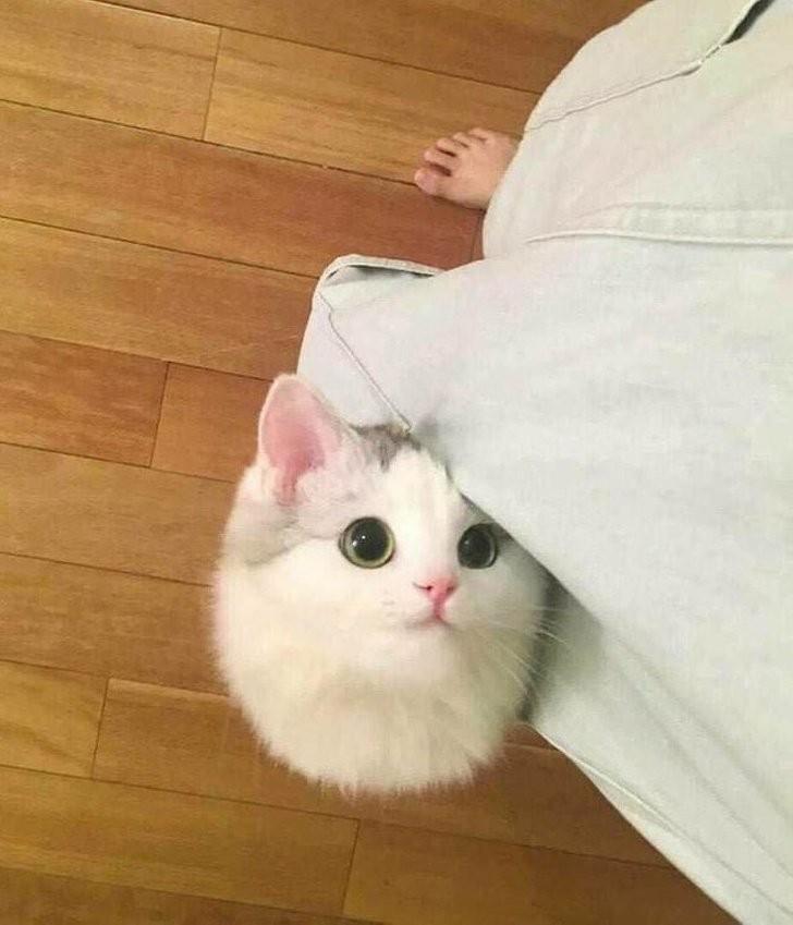 12 объяснений, после которых станут понятны некоторые привычки кошек