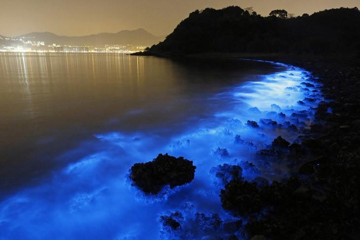 Живые организмы в море Гонконга