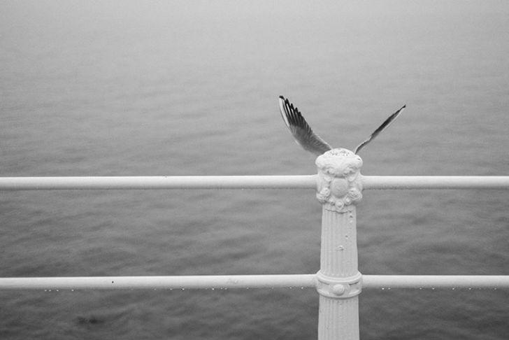 Совпадения в природе на фотографиях Дениса Черима