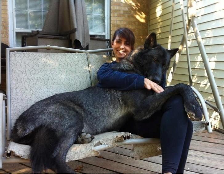 20 животных, глядя на которых трудно поверить в то, что они бывают таких размеров