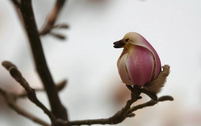 Похоже на птицу?