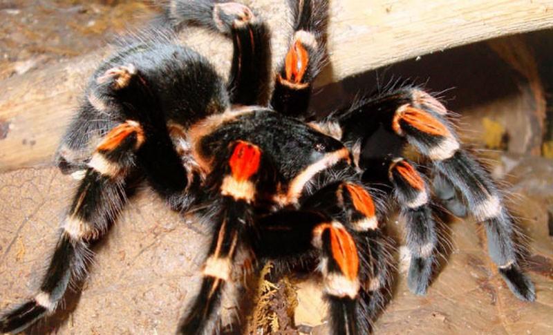Жизнь тарантула на видео